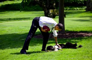 Bo_obama